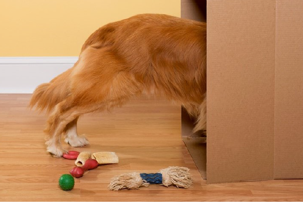 The Pros and Cons of Allowing Pets in your Property